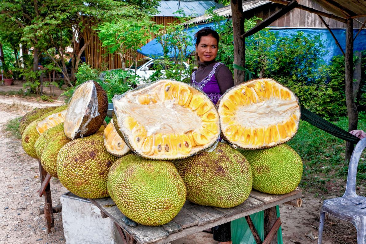 Jackfruit picture.https://www.nationalgeographic.com/people-and-culture/food/the-plate/2016/07/jackfruit-sustainable-vegetarian-meat-substitute/